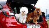 Ford Puma: il MegaBox è anche per cani - IL VIDEO